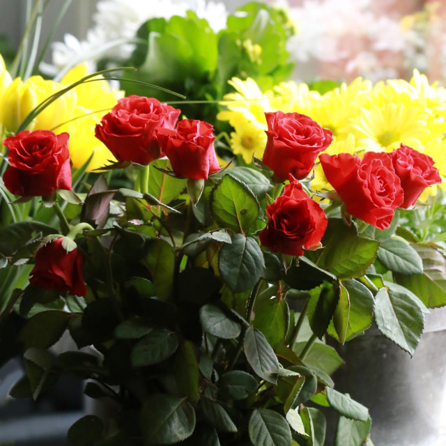 Ruusu%201.jpg
