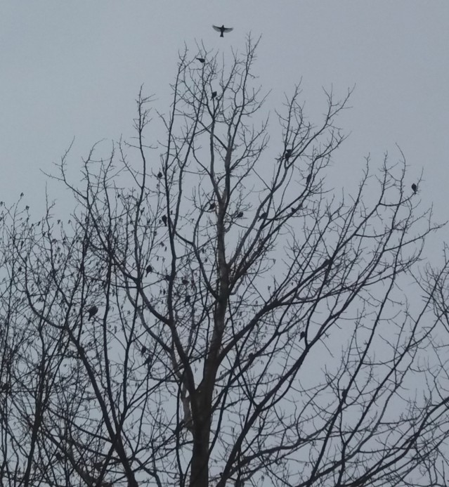 lintupuu.jpg