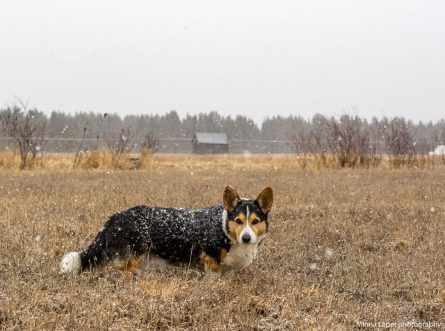 Koiranilmaaa-2.jpg