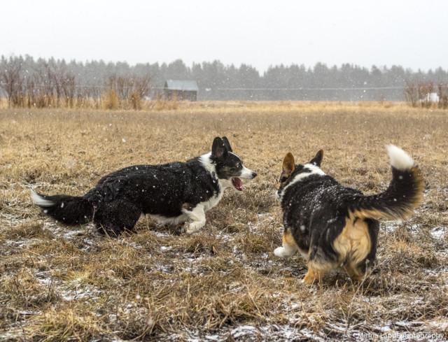 Koiranilmaaa-3.jpg