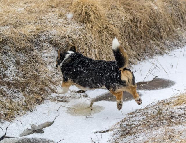 Koiranilmaaa-9.jpg