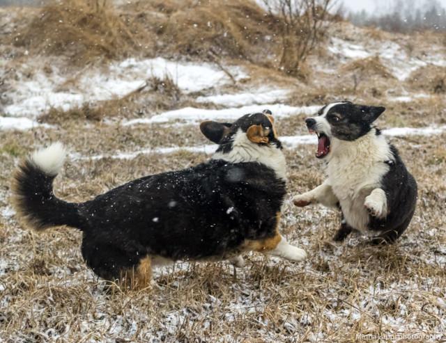Koiranilmaaa-10.jpg