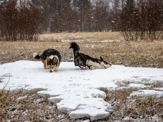 Koiranilmaaa-12a.jpg