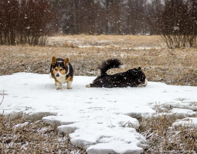 Koiranilmaaa-14.jpg