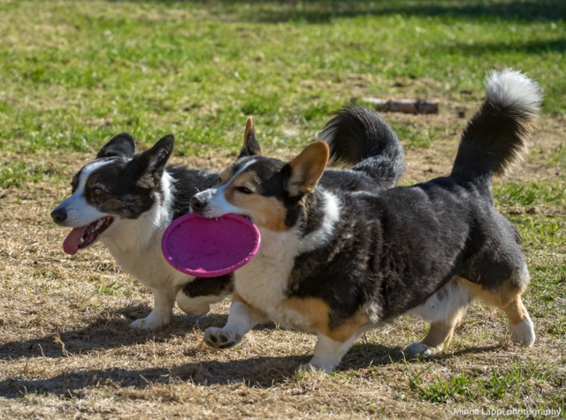 Frisbee-2.jpg