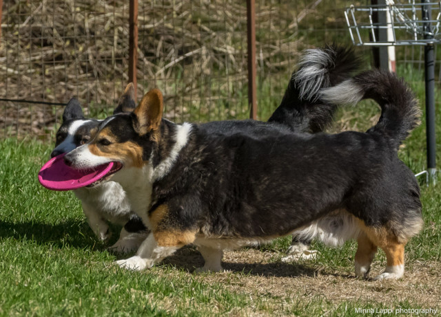 Frisbee-7.jpg