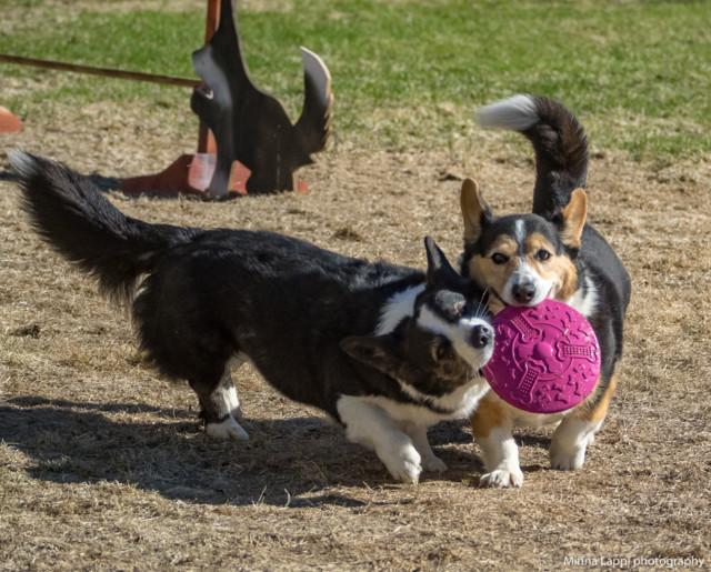Frisbee-10.jpg