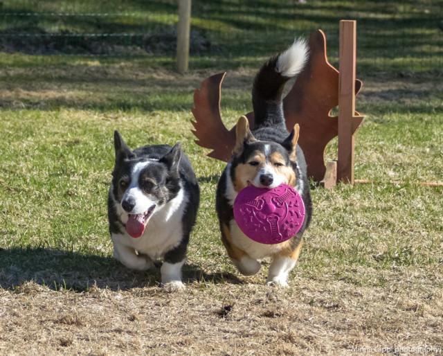 Frisbee-12.jpg