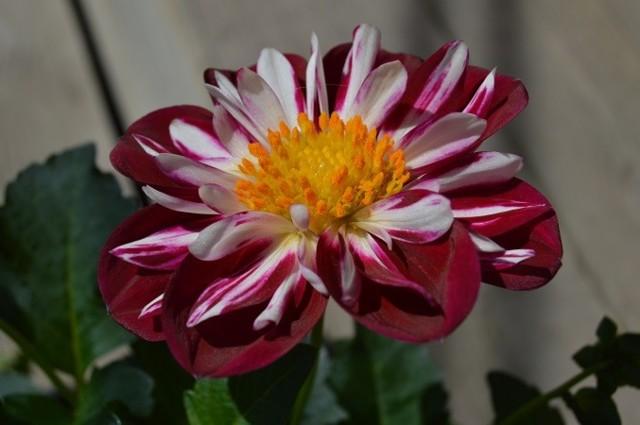 kukka11.jpg