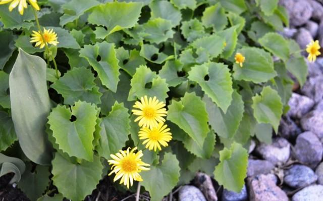 Kukkia%20009.jpg