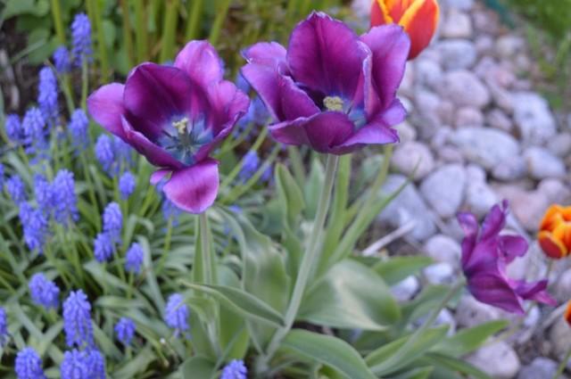 Kukkia%20010.jpg