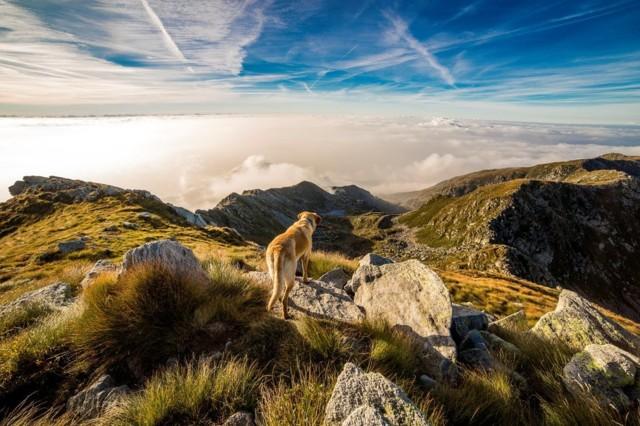 dog-mountain-mombarone-clouds-65867%20%2
