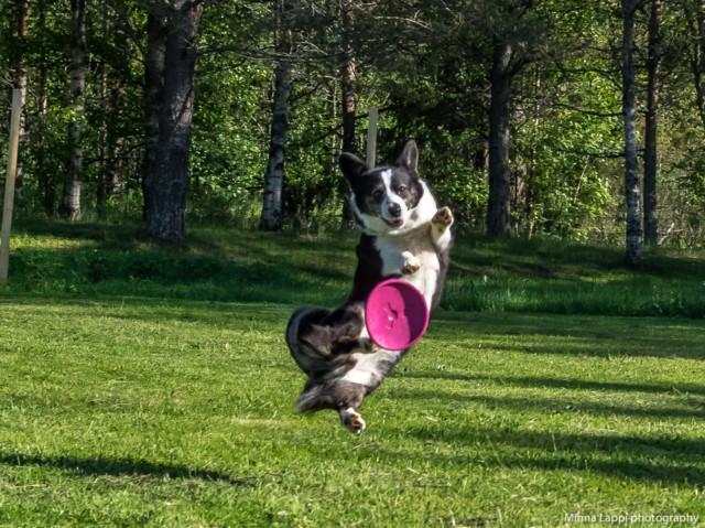 Frisbeeilta-3.jpg