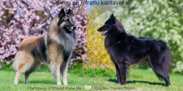 vieno_kauko_1.jpg