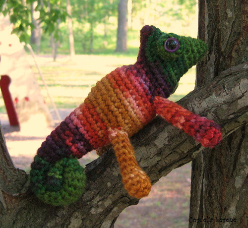 Chameleon0269.jpg