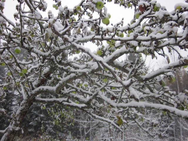 Lumen%20alla%20omenat%20002.jpg
