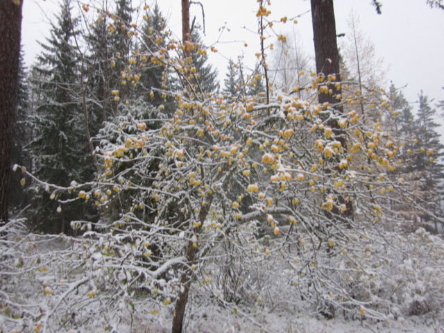 Lumen%20alla%20omenat%20004.jpg