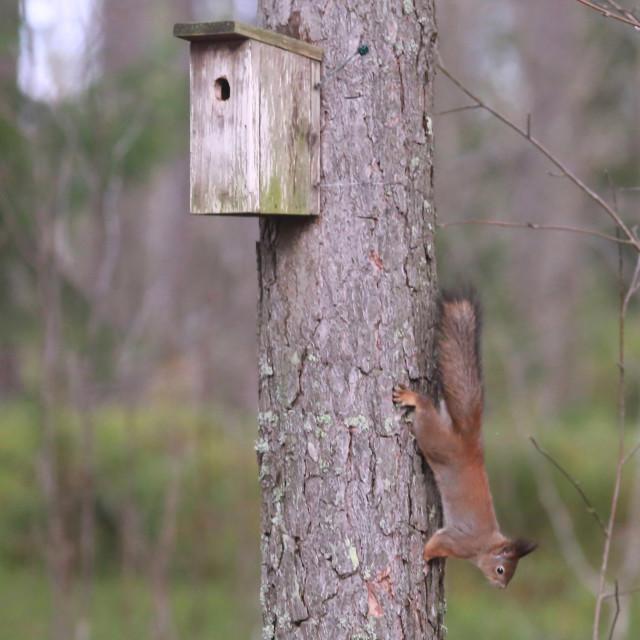 Orava%207.jpg