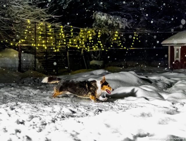 Lumisadefrisbee-2a.jpg