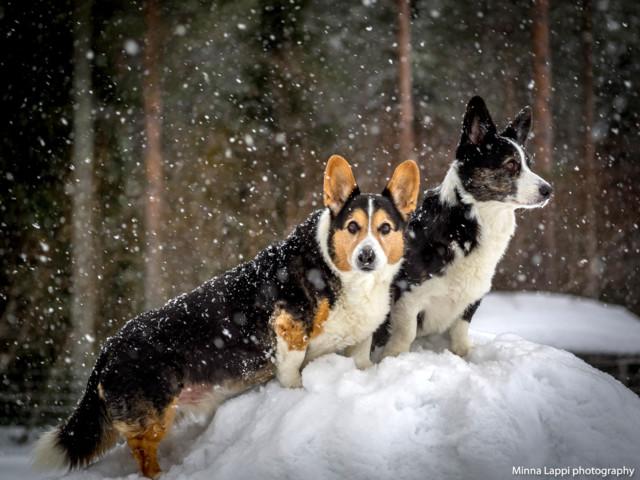 Lumisateessa.jpg