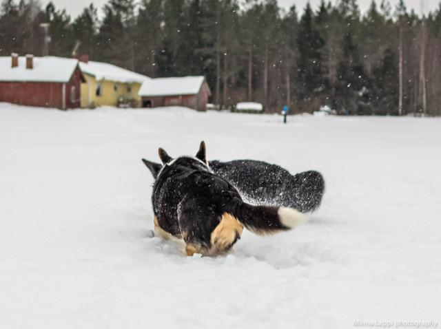 Lumipainia-8.jpg