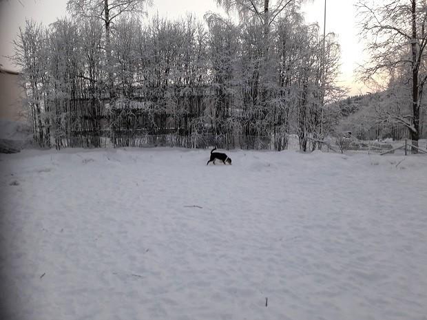 koirapuisto1.jpg