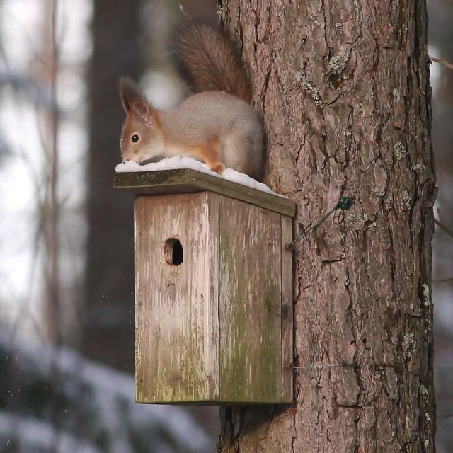 Orava%201.jpg