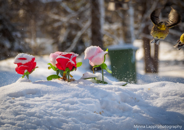 Ruusutarha-6.jpg