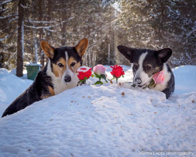 Ruusutarha-8.jpg