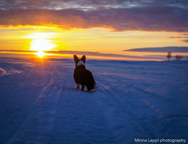 auringonlaskupietua-4.jpg