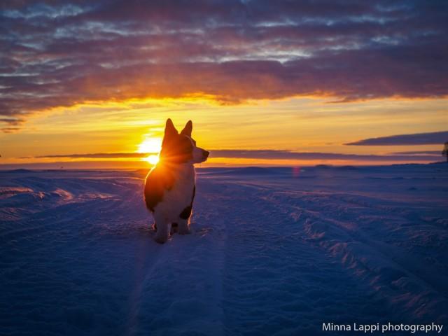 auringonlaskupietua-5.jpg
