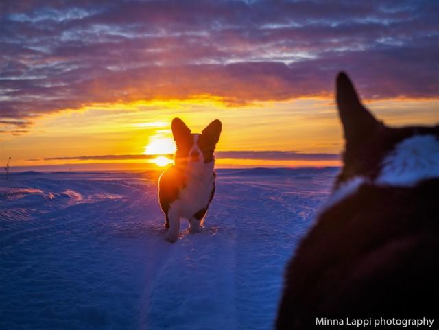auringonlaskupietua-6.jpg