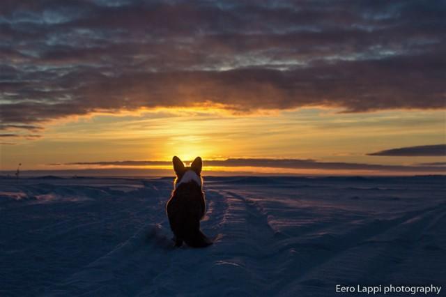 auringonlaskupietua-7.jpg