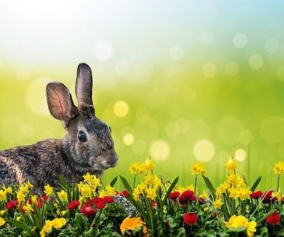 rabbit-3249427__340.jpg