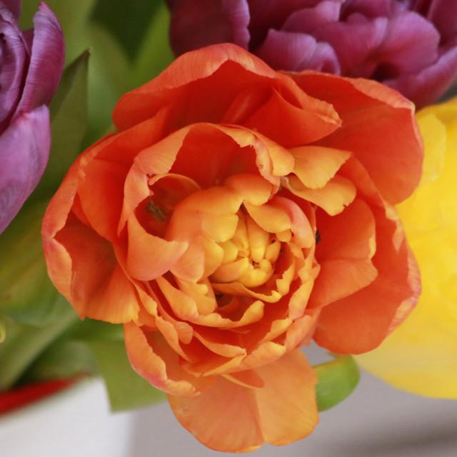 Kukkia%202.jpg
