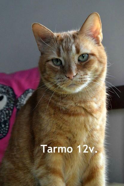 tarmo2.jpg