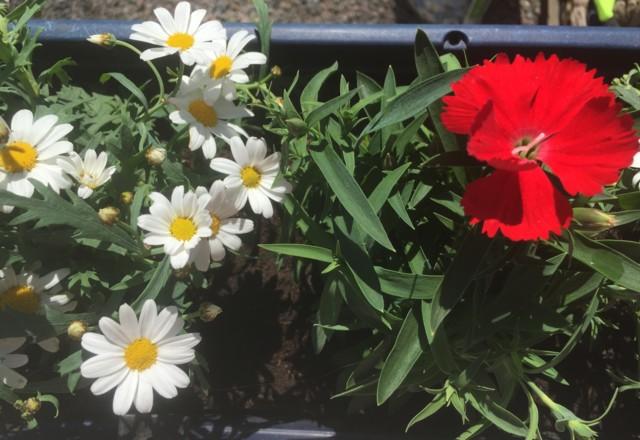 kukkalaatikko.jpg