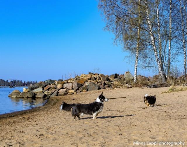 Koirien%20uimarannalla-3.jpg