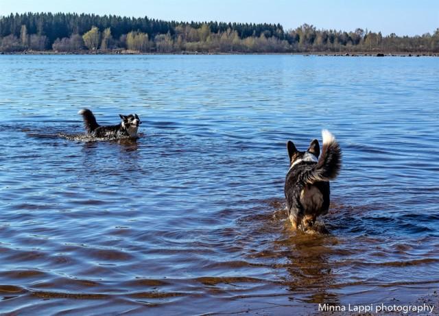 Koirien%20uimarannalla-5.jpg