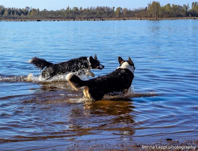 Koirien%20uimarannalla-11.jpg