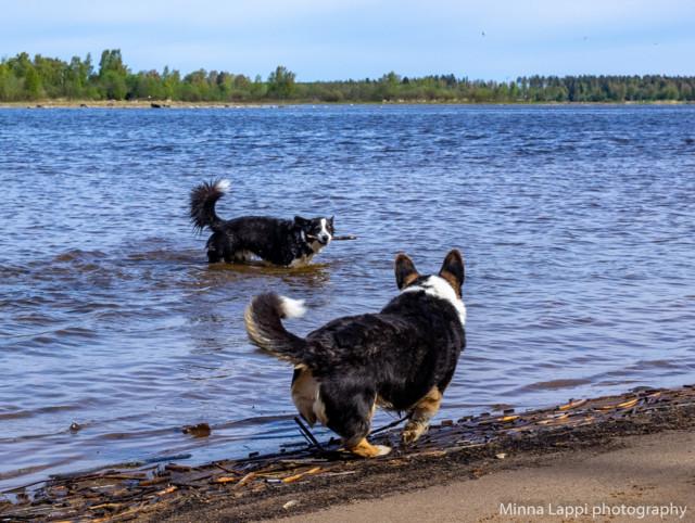 Koirien%20uimarannalla-7.jpg