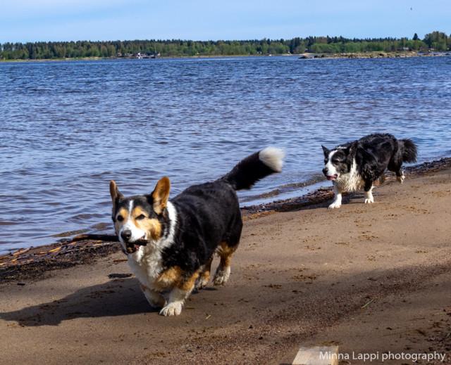Koirien%20uimarannalla-8.jpg