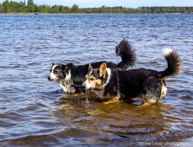 Koirien%20uimarannalla-15.jpg