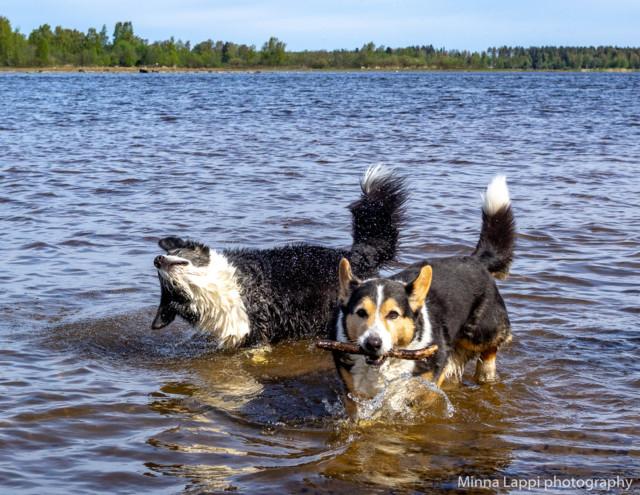 Koirien%20uimarannalla-16.jpg