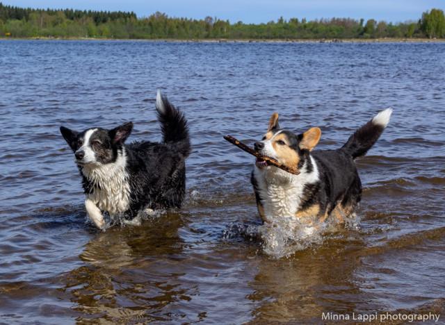 Koirien%20uimarannalla-18.jpg