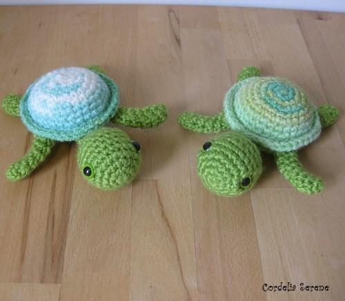 turtle1540.jpg