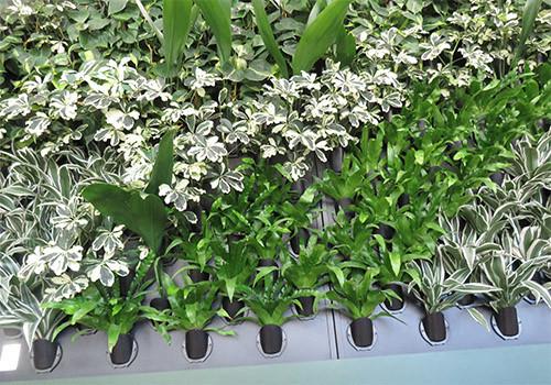 kukkia%20sein%C3%A4ss%C3%A4.jpg