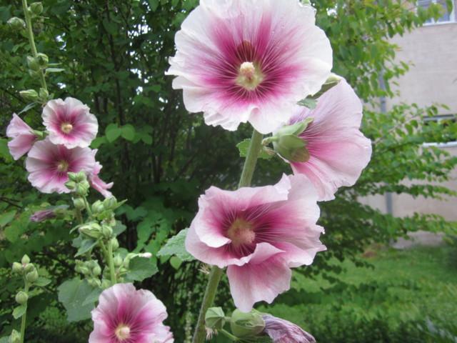 Perhosia%20013.jpg