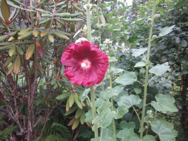 Perhosia%20016.jpg