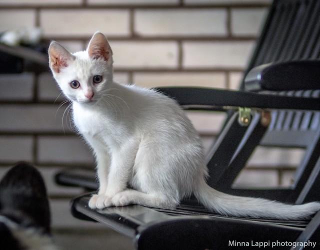 Kissojen%20kanssa-17%20%282%29.jpg